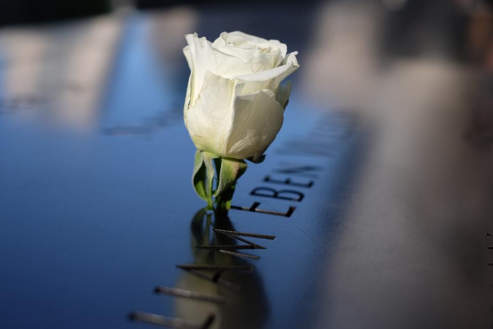 Memorial rose.