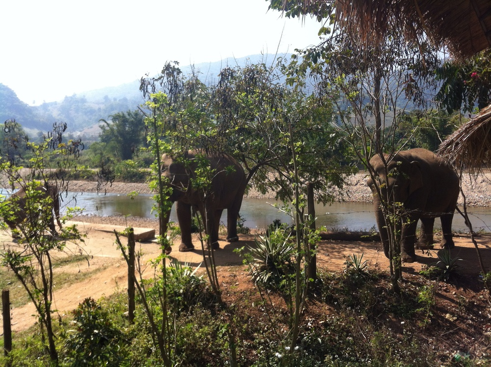 The Elephant Nature Park