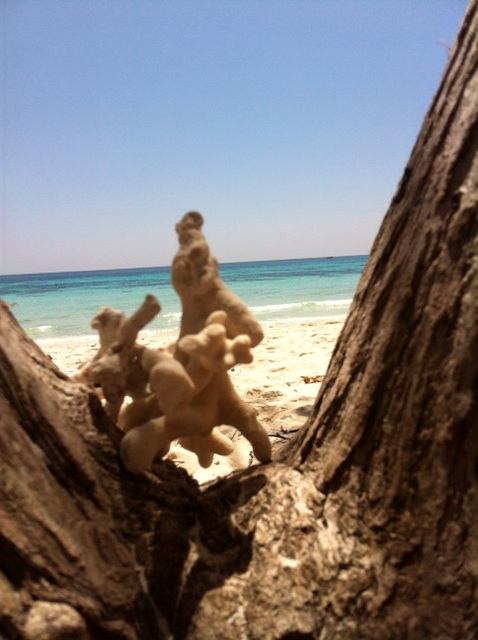 My coral sculpture on the tiny island of Koh Rok