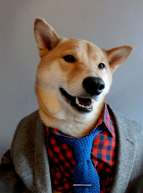 Menswear Dog / Second Floor Flat