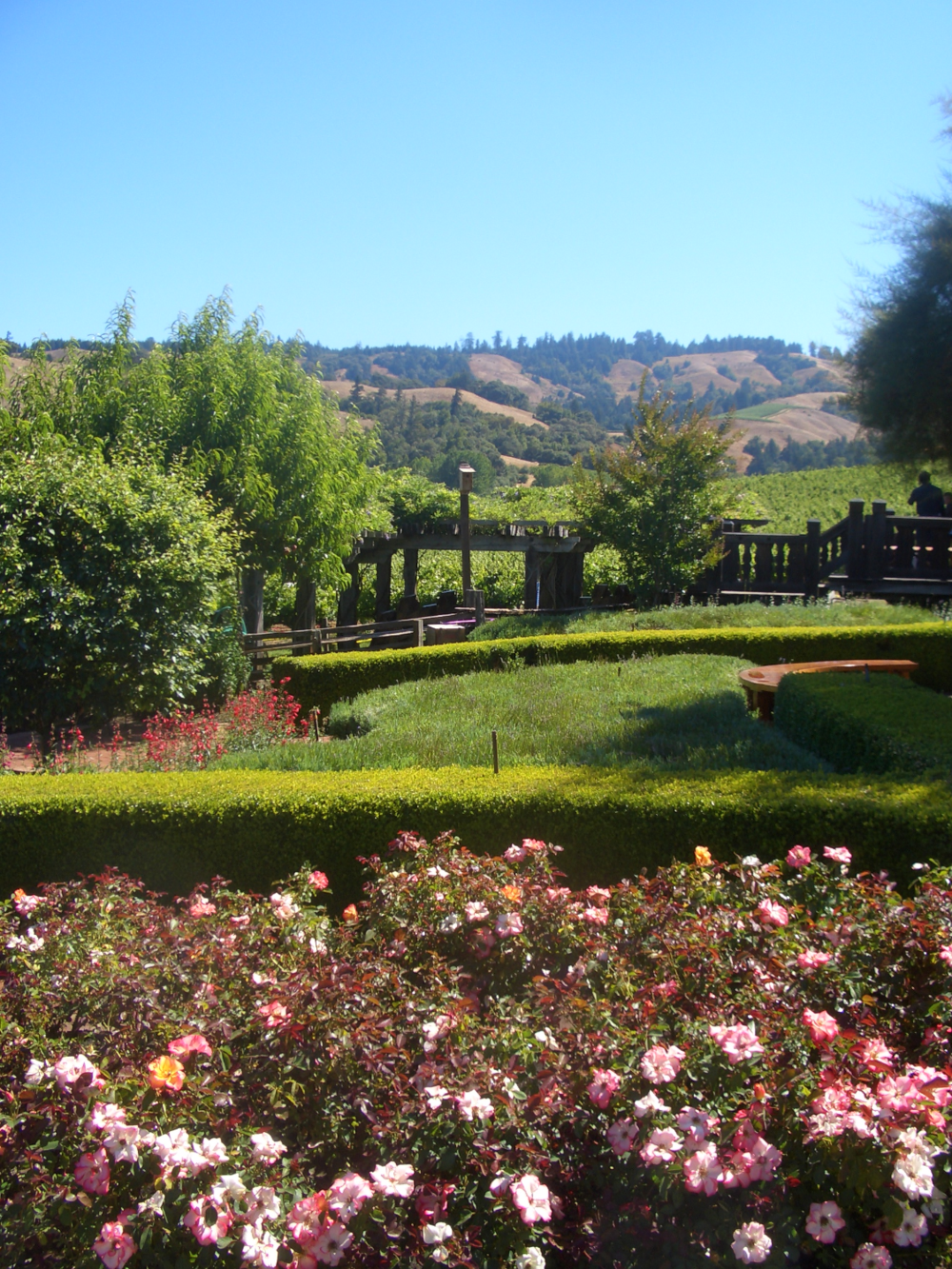 Navarra Vineyards