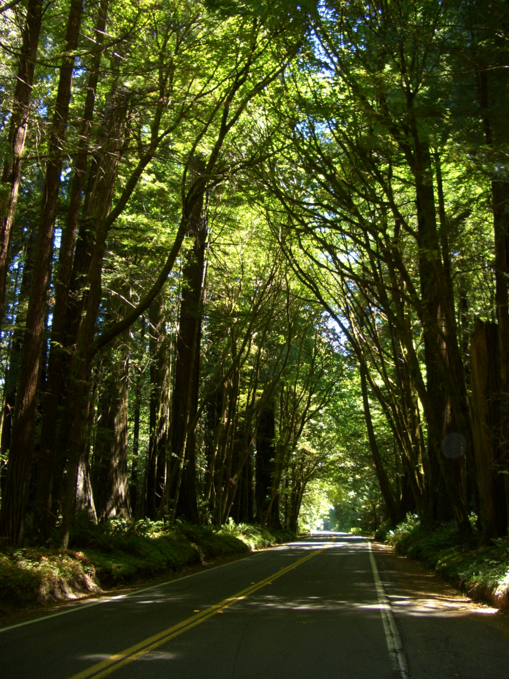 Forest road - northern California