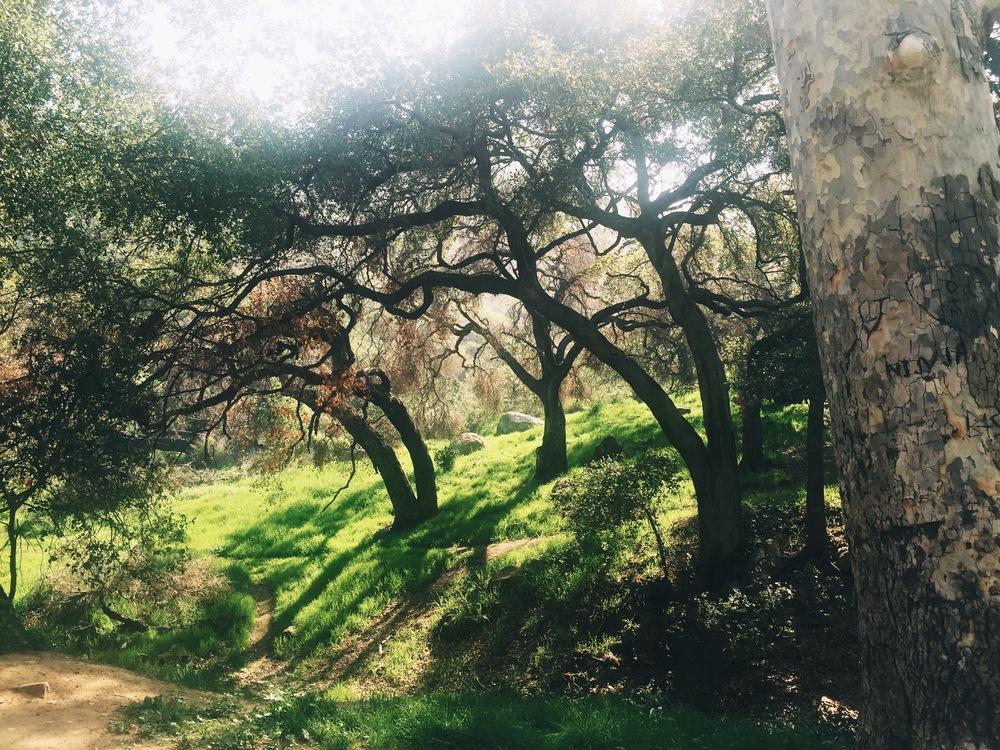 Bronson-Canyon Griffith Park Trail.