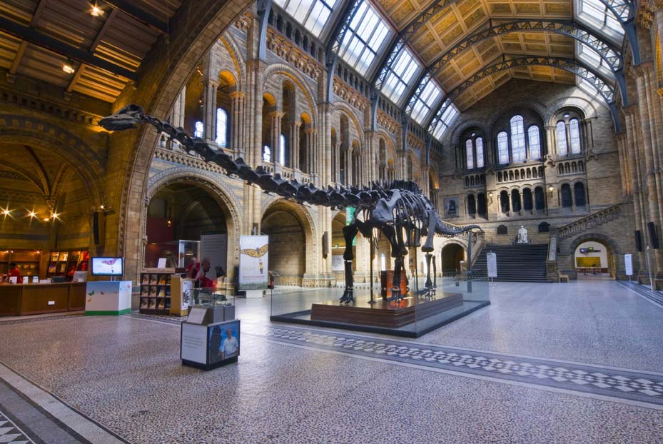 "NHM's ""Dippy"", a Diplodocus cast that's been occupying Central Hall since 1979. © The Trustees of the Natural History Museum, London"