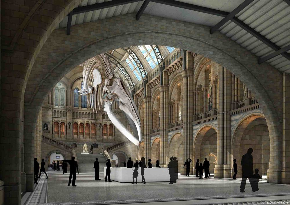 The stunning view that'll be greeting Natural History Museum visitors starting from 2017. ©2015 Casson Mann