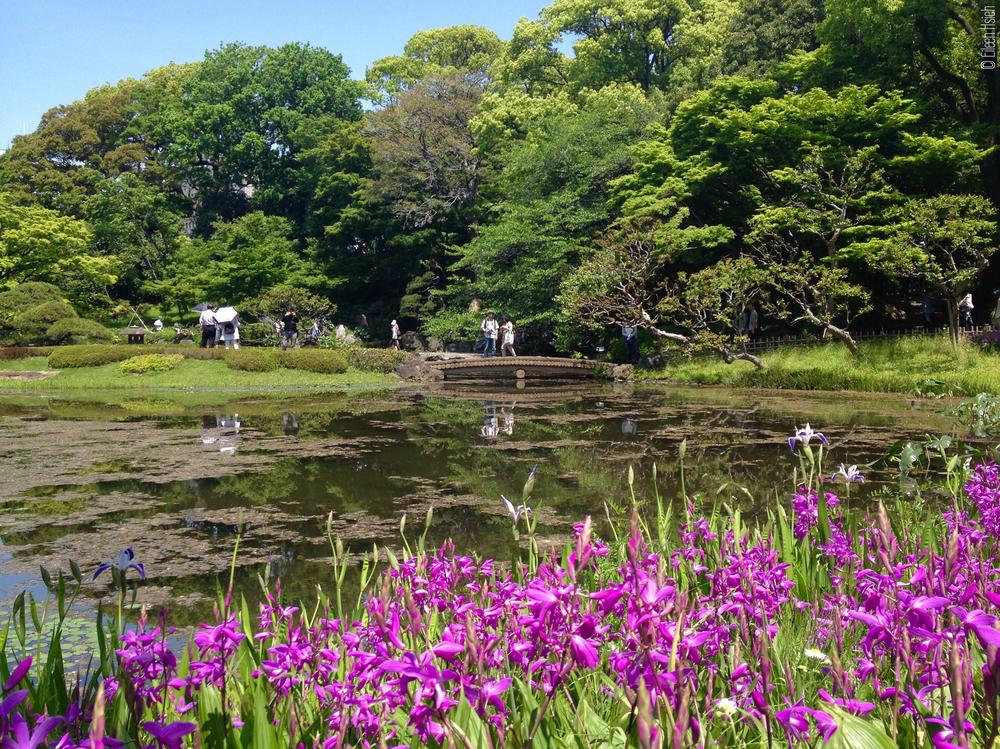 Ninomaru Garden.二之丸庭園。© Eileen Hsieh