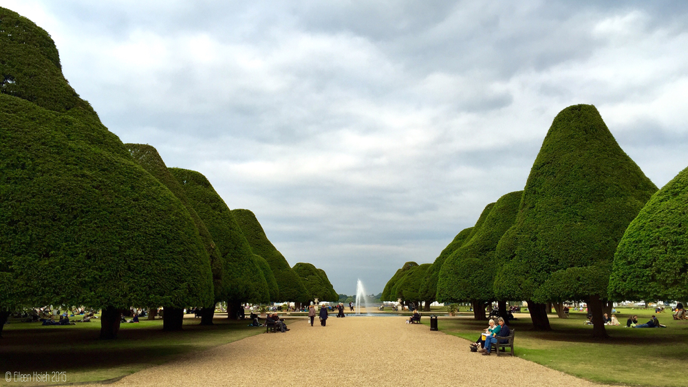 The Great Fountain Garden and its gumdrop-shaped yew trees. 噴泉花園和逗人喜愛的紫杉。© Eileen Hsieh 2015