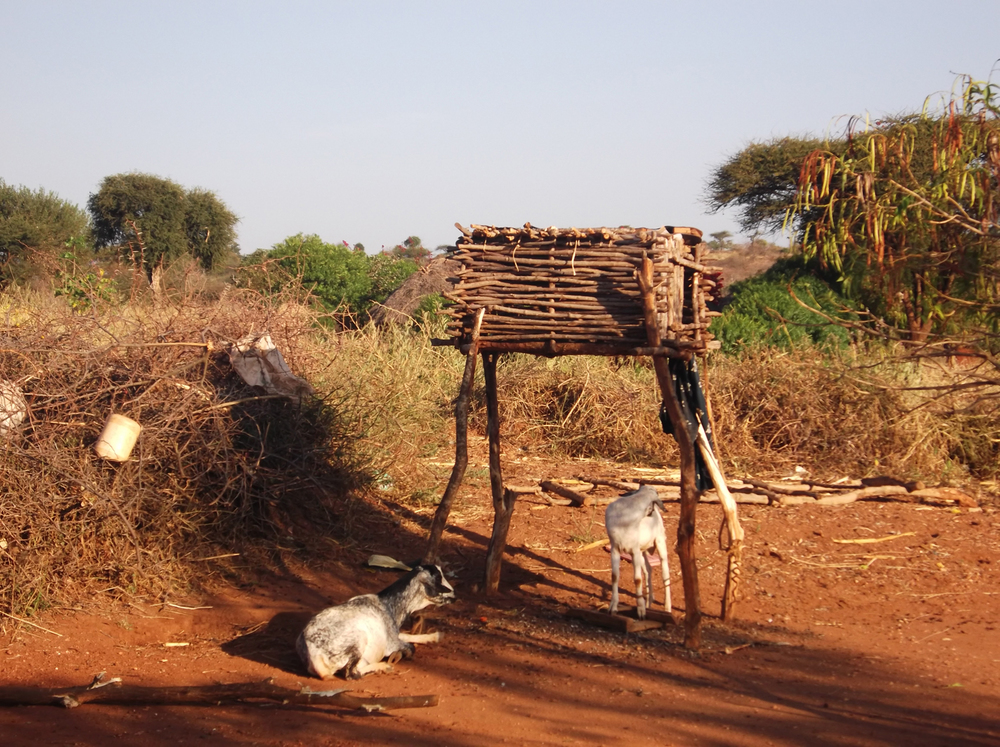 When we started receiving the money we bought goats and chickens. Before we had them life was worrying because we had to spend so much money buying milk and eggs.  © Mutungi 2012 / ODI / PhotoVoice