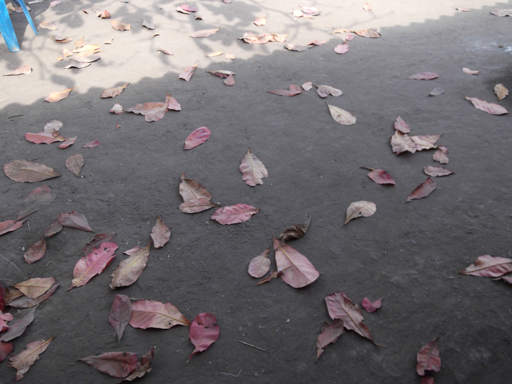 I didn't want these leaves to fall on the ground – it was clean!  © Fabião António Tivane 2012 / ODI / PhotoVoice