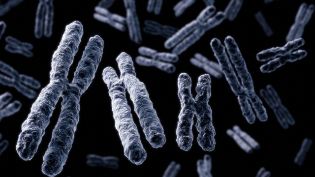 Telomeres  are the strands of genetic code that make up the shafts of DNA. Photo Credit: Felix Mockel / The-Scientist.com
