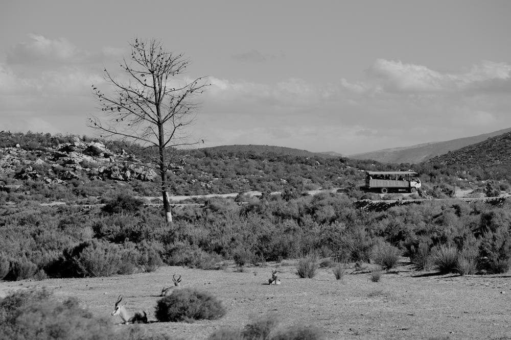 Box Springs