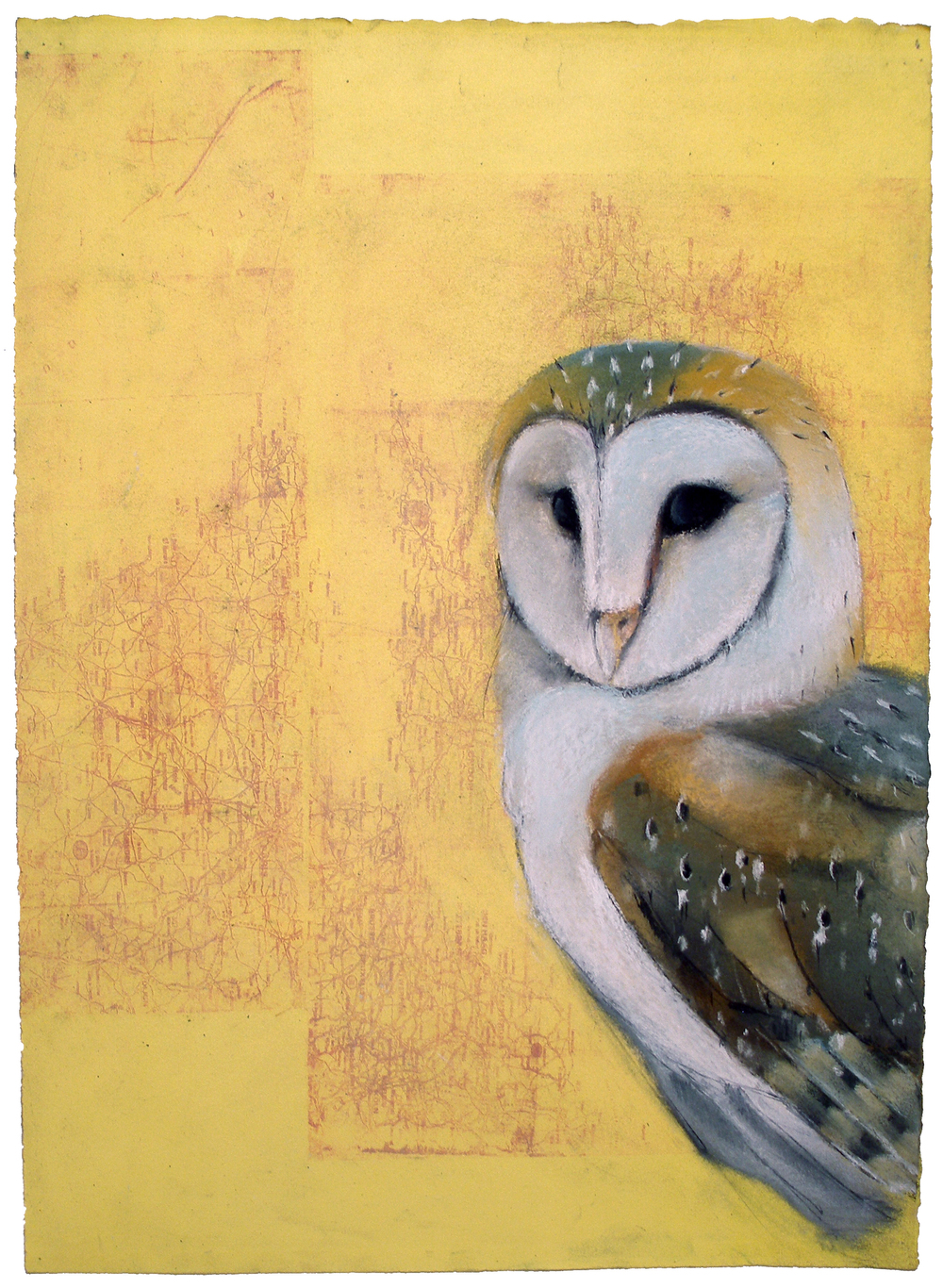 Barn Owl #15
