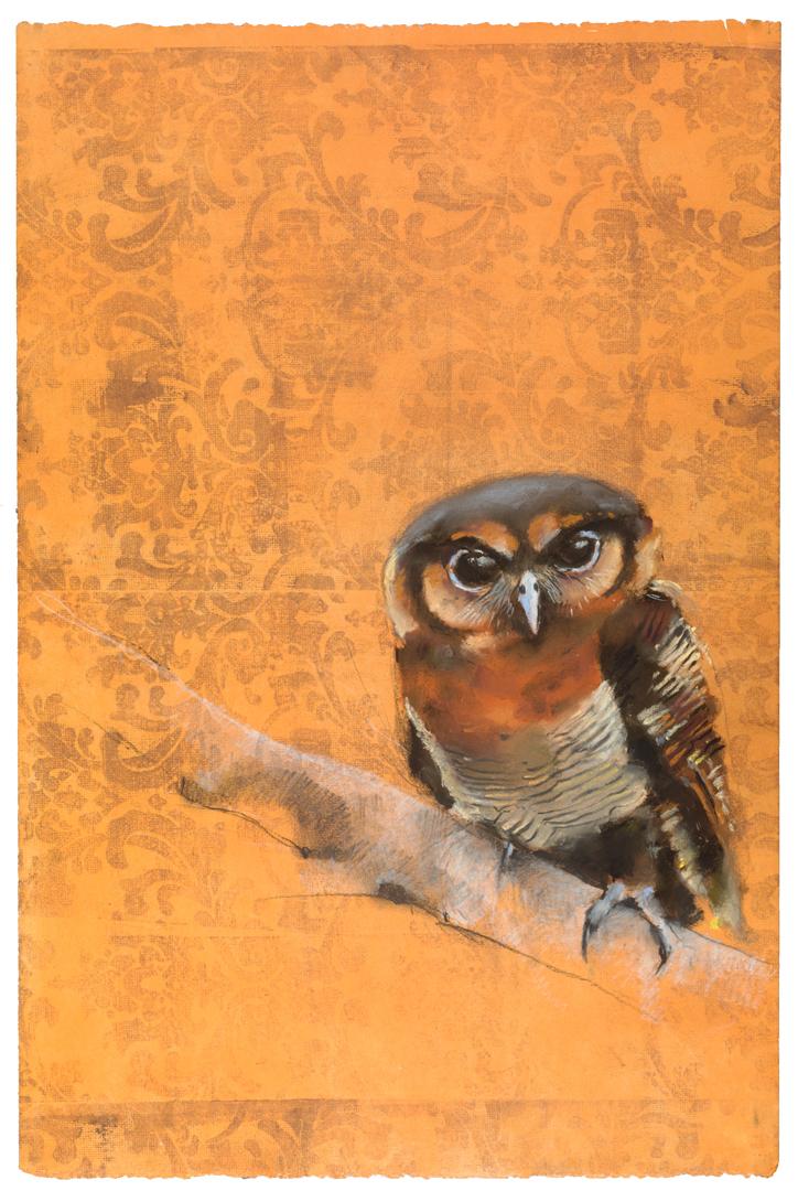 Wood owl #15