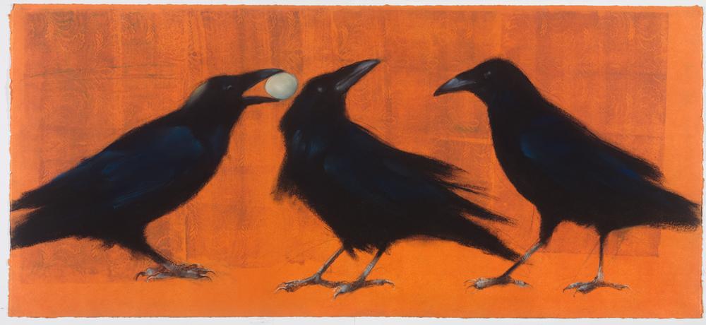 Ravens and egg