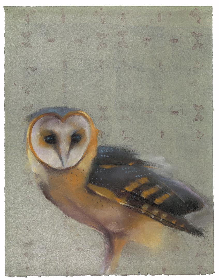 Barn Owl on Silver