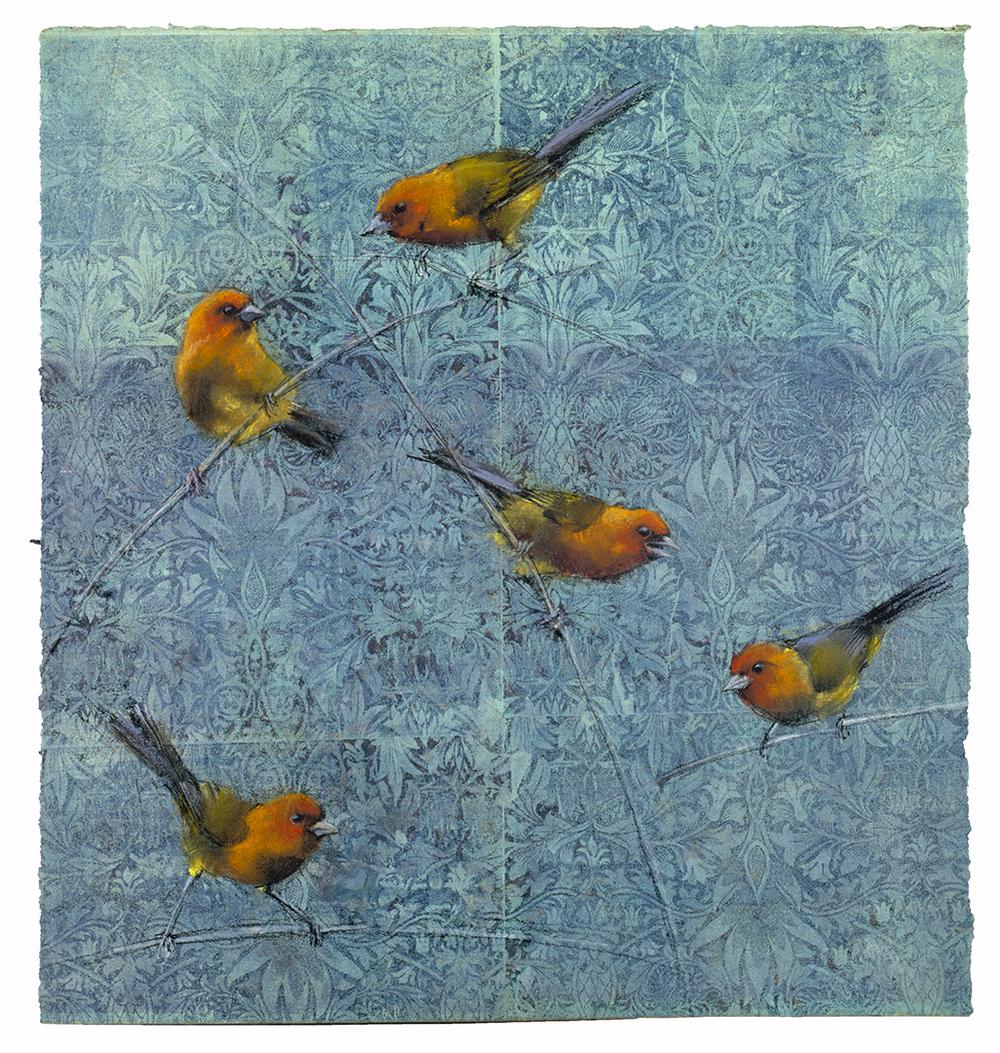 Ochre Bellied Finches