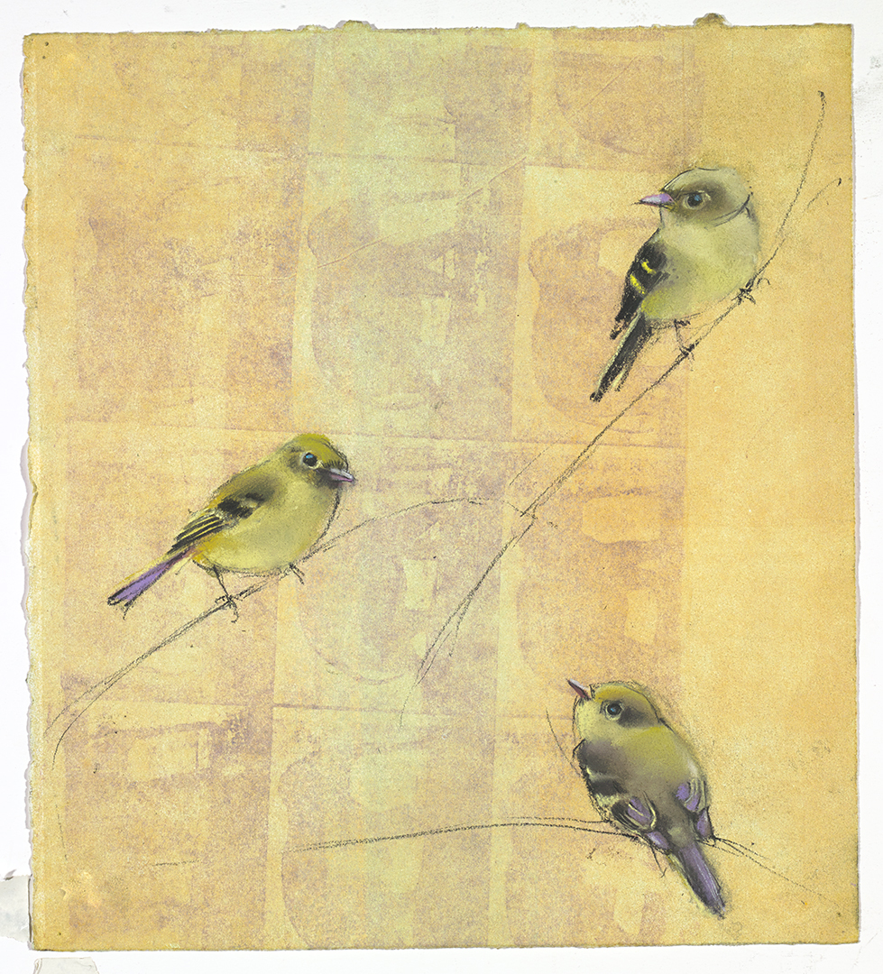 Little Yellow Flycatchers on Yellow