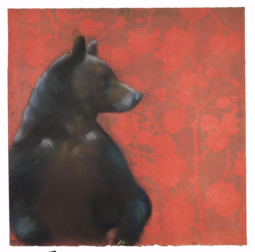 Bear on Eucalyptus Leaves