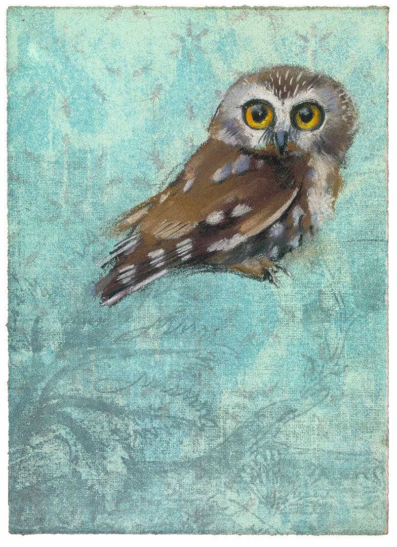 Saw Whet Owl #29