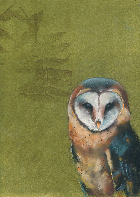 Barn Owl on Green