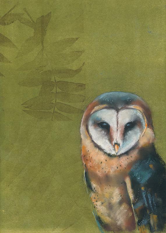 Barn Owl on Green