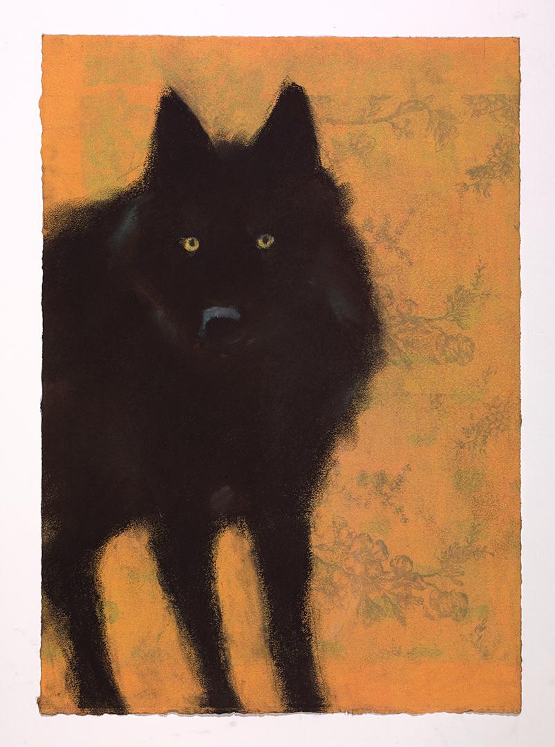 Wolf #43