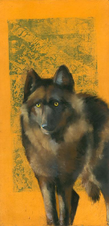 Wolf on Pt Reyes