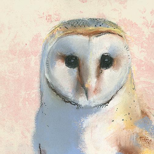 Barn Owl on Pink