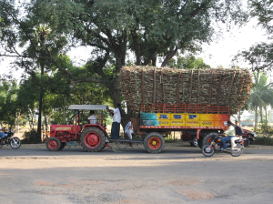 a-lot-of-sugar-cane1.jpg