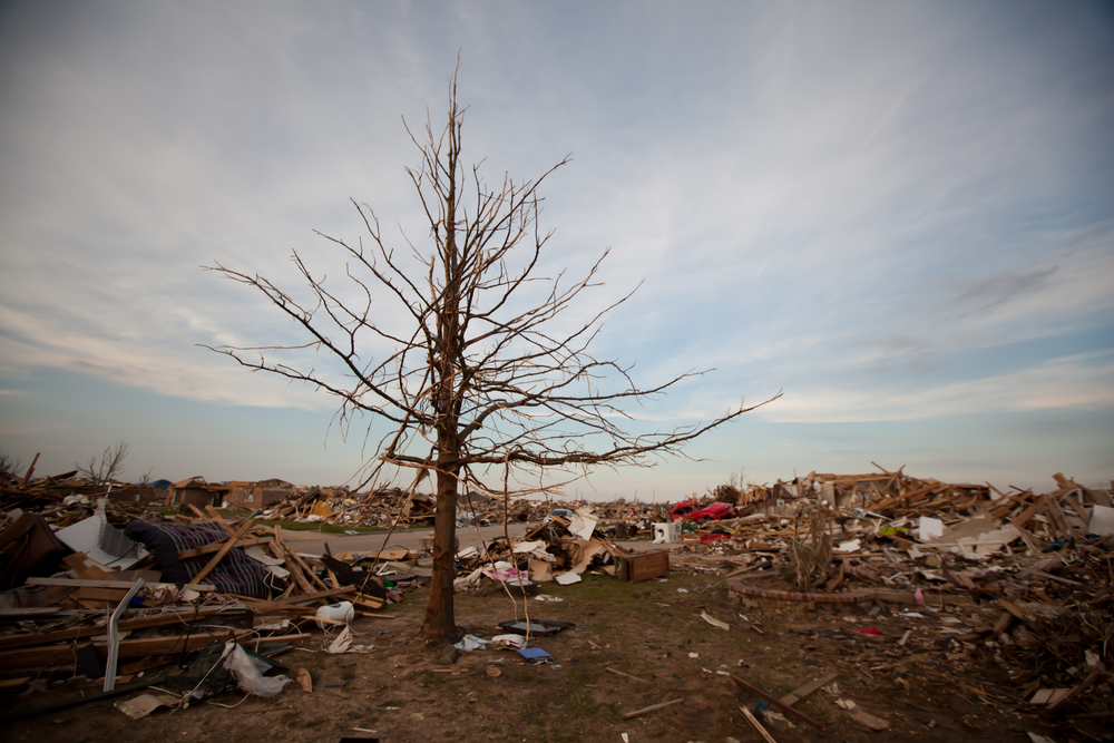 Trees which stood in the tornado's path were stripped bare of their bark and foliage.