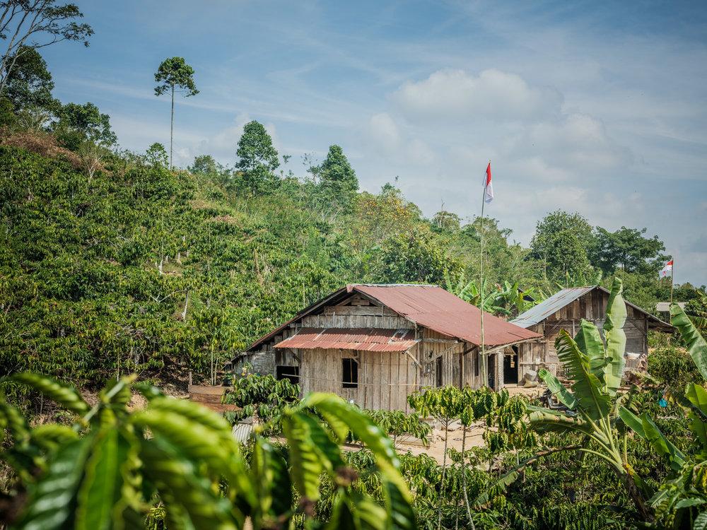 LDC-Coffee-Indonesia-Lampung-web-7841.jpg