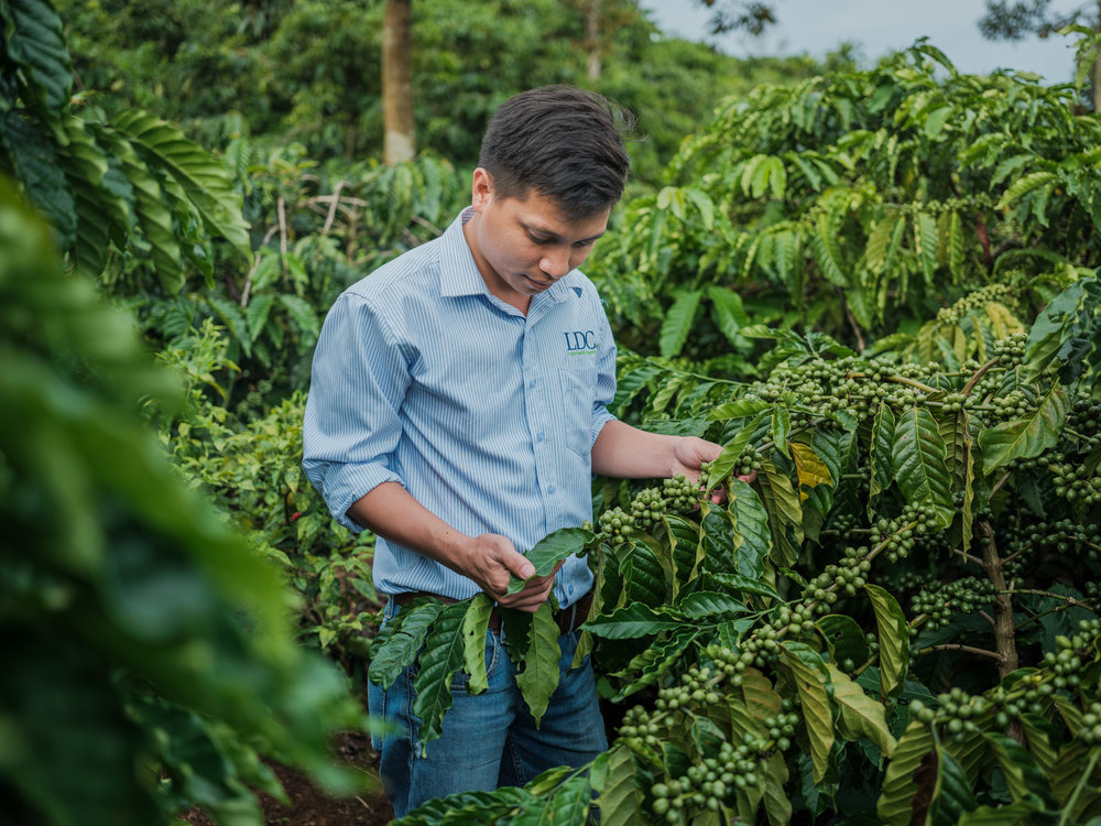 LDC-Coffee-Vietnam-Lam-Dong-web-5952.jpg