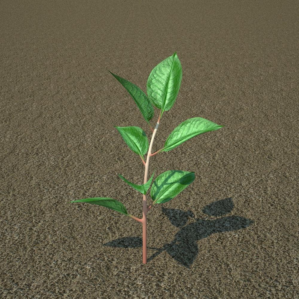 seedling arjo.jpeg