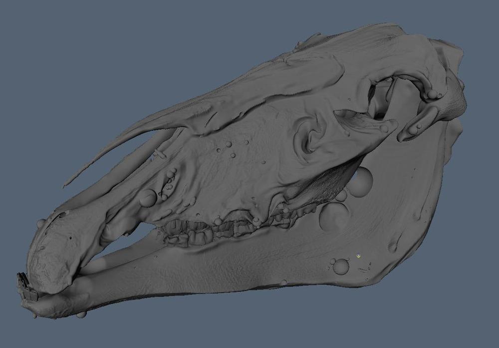 3DCoat_HorseSkull.jpg
