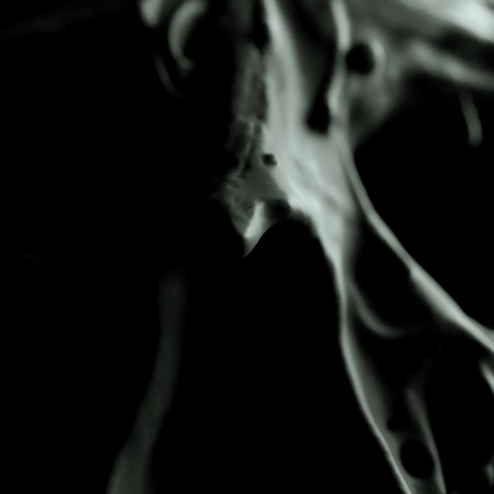 Octane_HumanSkull_Closeup.png