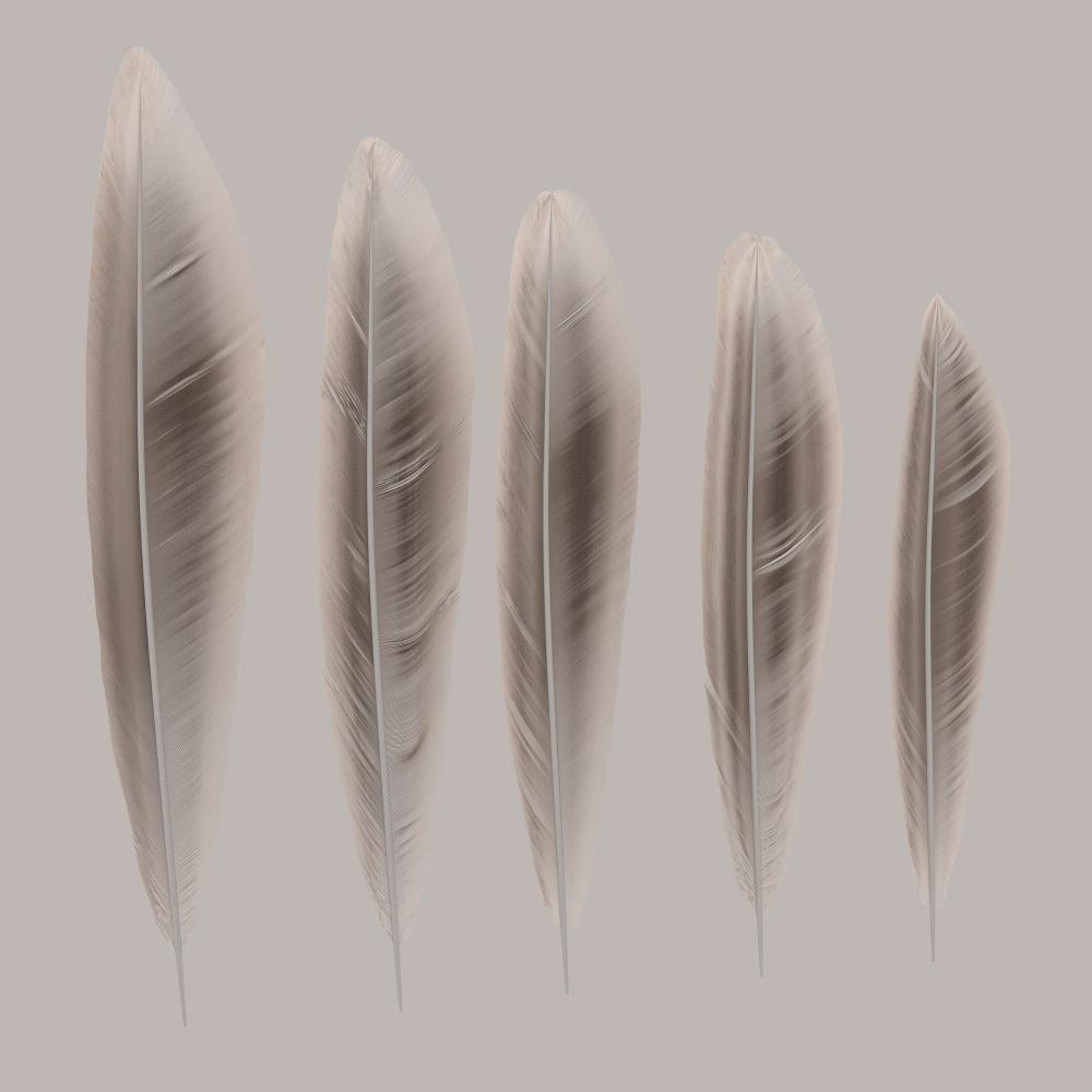 FeatherGen_014_Row.jpg