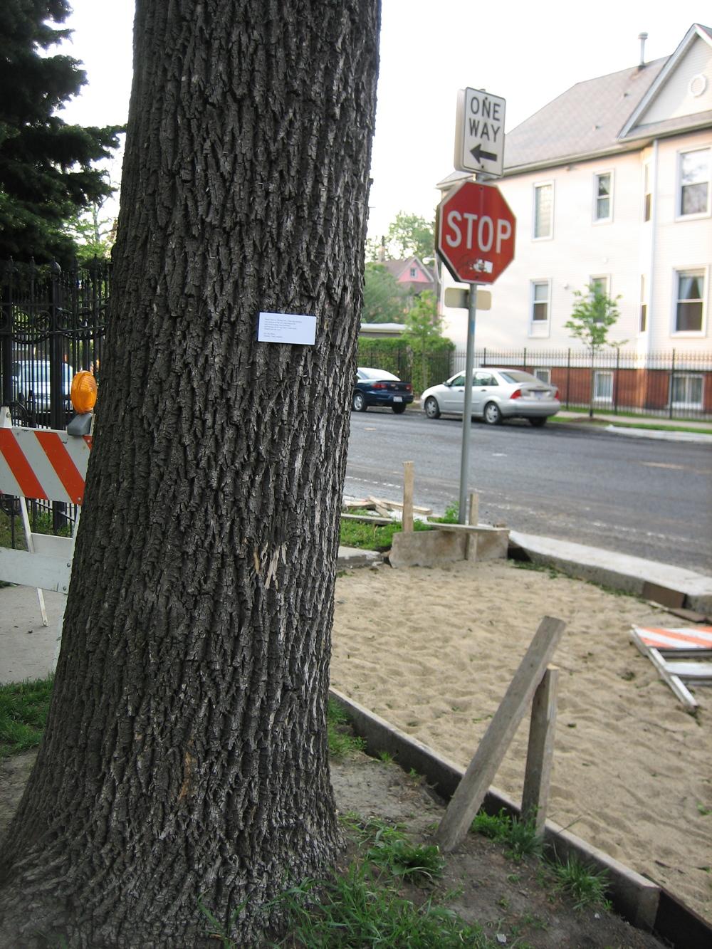 bernard street (tree).JPG