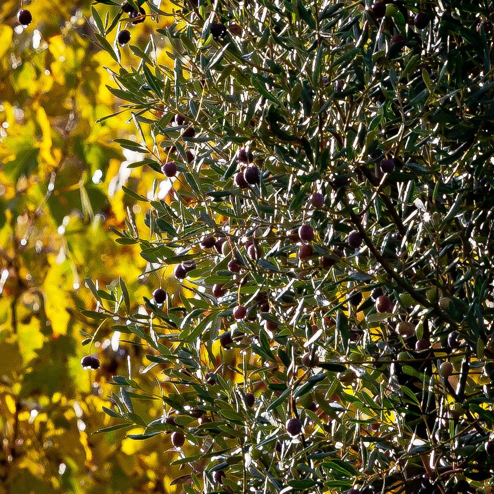IT CHIA San Fedele ER day 5 sweet light 201011 -4117-2.jpg