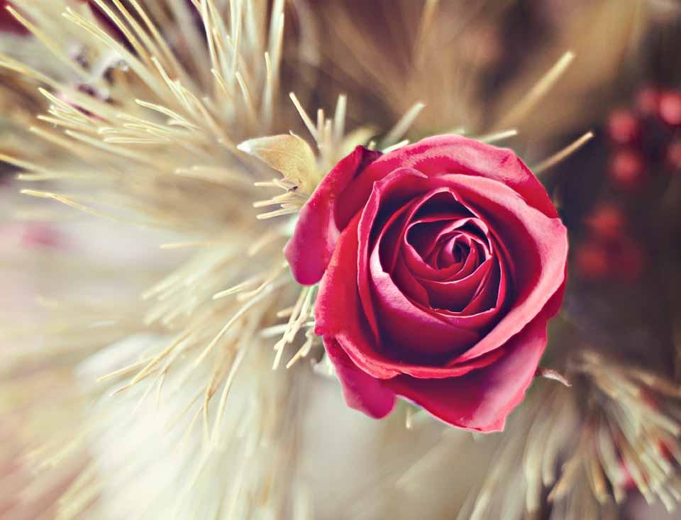 RoseFB.jpg