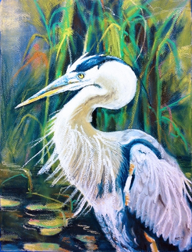 Great Blue Heron - oil pastel on watercolor paper (11x15 inches)
