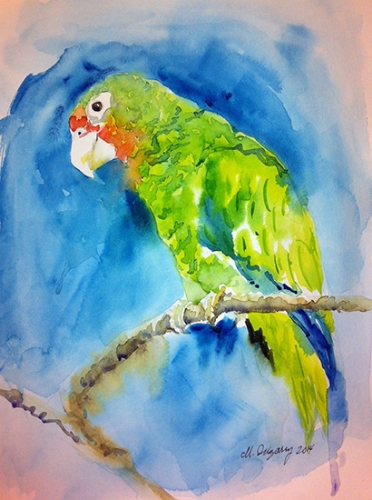 Puertorican parrot - Watercolor on watercolor paper (9x12 inches)