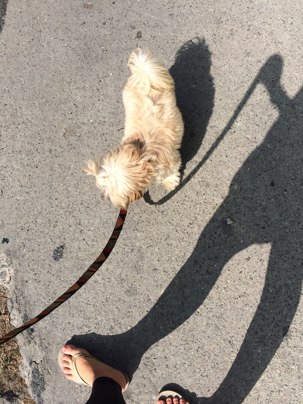 Chewie-walking
