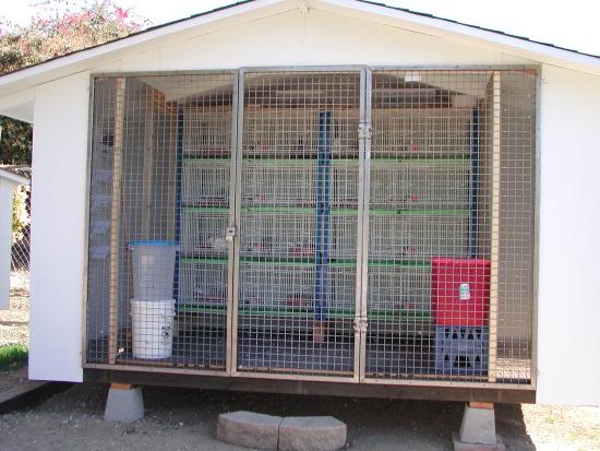 My personal breeding loft.
