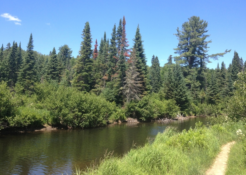 Algonquin Park, Whiskey Rapids Trail, Summer 2012