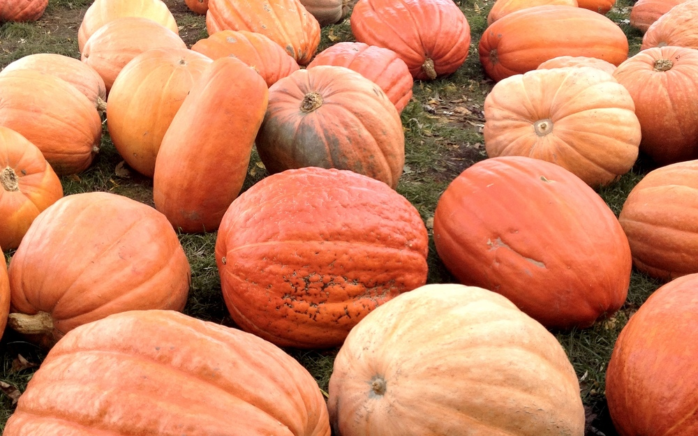 We ended up with two tiny pie pumpkins, but they had so many different varieties and sizes, including beautiful mottled Mexican and blue pumpkins. I think the tall, skinny one would be fun to carve.