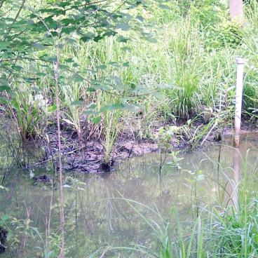 WetlandsBank960.jpg