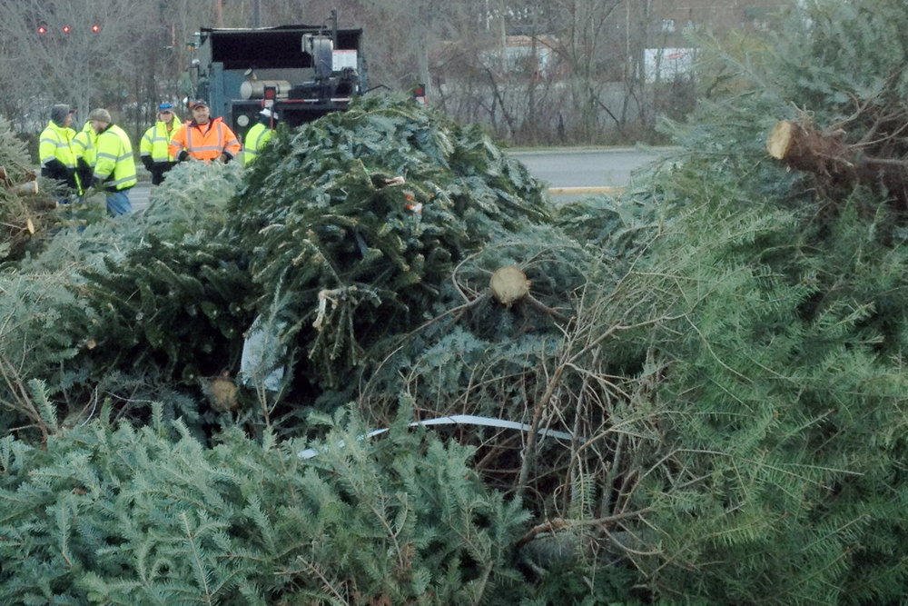 Whitfield County Public Works staff prepare to mulch live Christmas trees during Keep Dalton-Whitfield Beautiful's annual treecycling event.  The next event will be on Saturday, January 3, 2015 from 9 am to 1 pm.