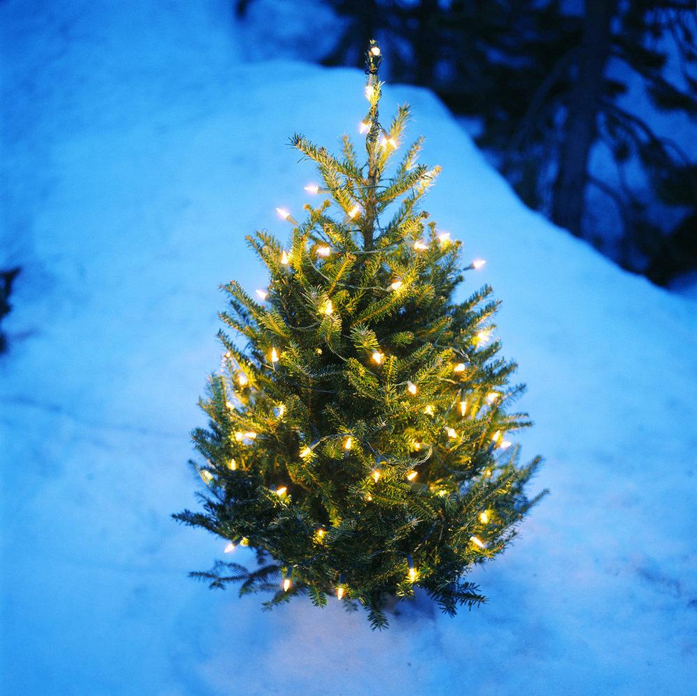 ChristmasTreeOutsideLightsSnow.jpg