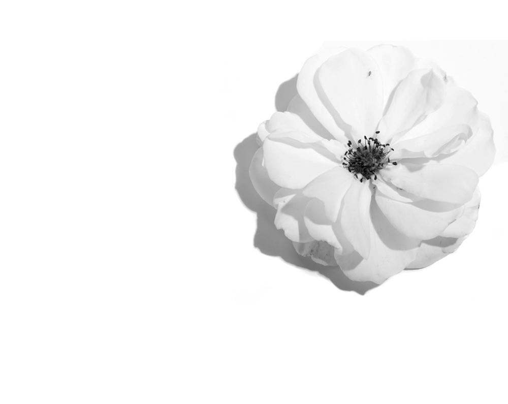 flowerweb.jpg