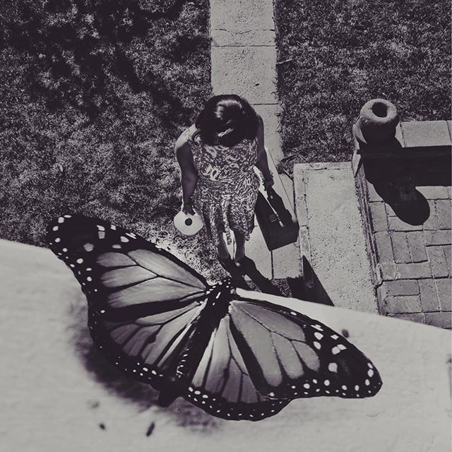 Another work in progress #butterfly #spies are all around us...